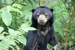 Beruang Madu Ditemukan di Area Konservasi Tambang JBG di Jorong Tala, Begini Upaya yang Dilakukan