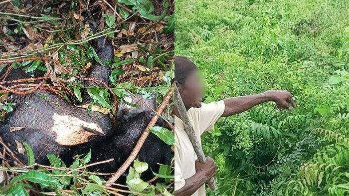 Akhirnya Ditembak Mati, Beruang Madu di Pagatan Sempat Masuk Areal Perumahan Warga