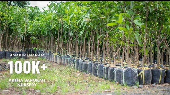 Jual Berbagai Bibit Tanaman, Artha Barokah Banjarbaru Sebut Bibit Alpukat dan Durian Paling Diminati