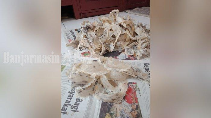 Bisnis Sarang Burung Walet Jadi Potensi Usaha yang Menjanjikan di Palangkaraya