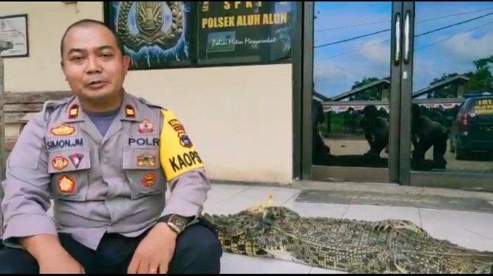 Buaya Muara Ditemukan di Aluhaluh Kalsel, Kapolsek Imbau Warga untuk Berhati-hati
