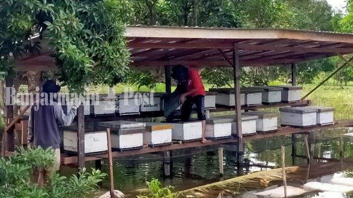 Aneka Buah di Tempat Wisata Budi Daya Lebah Madu Sungai Durait Hulu Kabupaten HSU
