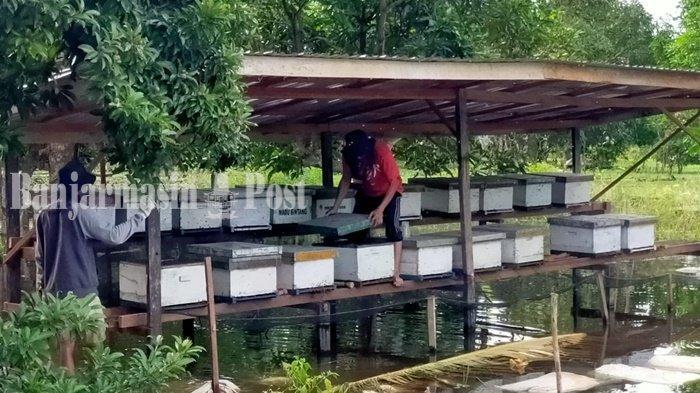 Wisata Lebah Madu Bakal Banyak Manfaat Bagi Warga Kabupaten HSU