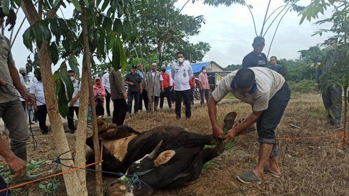 Bupati Balangan Serahkan Hewan Kurban untuk Dibagikan pada Kaum Dhuafa