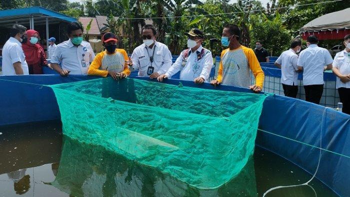 Kampung Haruan Pertama di Indonesia, Bupati Inginkan Katupat Kandangan Ikannya Gabus