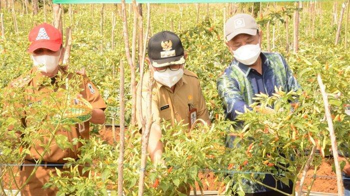 Dinas TPH Kalsel Dukung Pengembangan Sentra Holtikultura di Kabupaten Tabalong