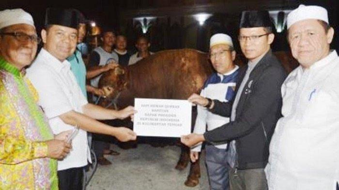 Pemprov Kalteng Distribusikan 300 Ekor, Sapi Kurban Bantuan Presiden Dipotong di Sini