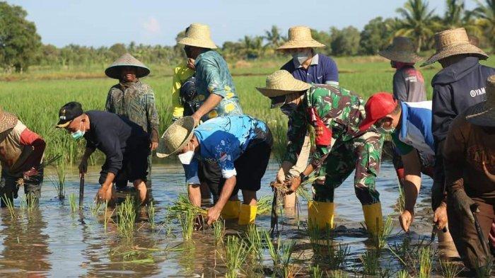 Dukung Petani Kembangkan Padi Lokal, Pemkab Tanahlaut Salurkan Bantuan Saprotan