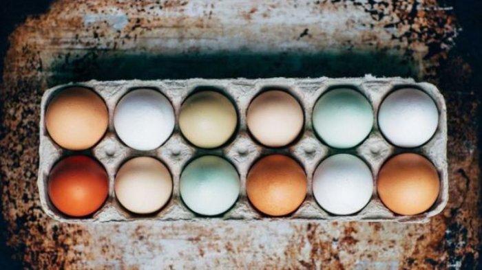 Kamu Doyan Makan Telur! Mengapa Warna Telur Ayam Bisa Berbeda?