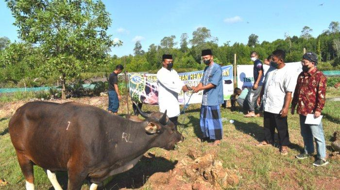 Keluarga Besar Lanal Kotabaru Bagikan Daging Kurban ke Warga Kurang Mampu