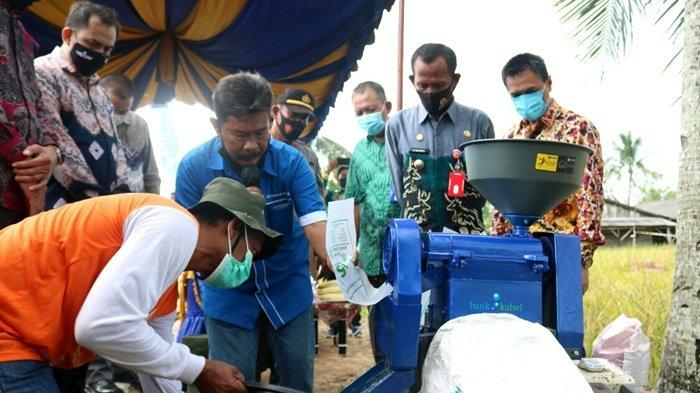 Bank Kalsel dukung petani Tala panen demplot padi unggul