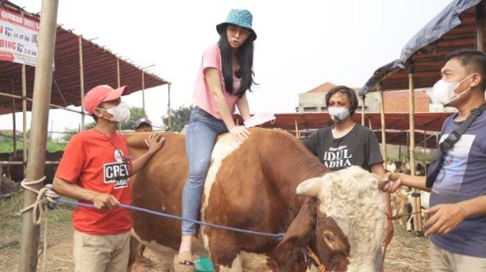 Momen Denise Chariesta berburu sapi untuk dikurbankan