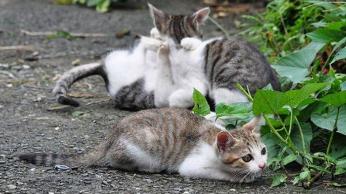 Kisah Desa Mati di Taiwan yang Kini Menjadi Surganya Kucing dan Menjadi Tujuan Wisata