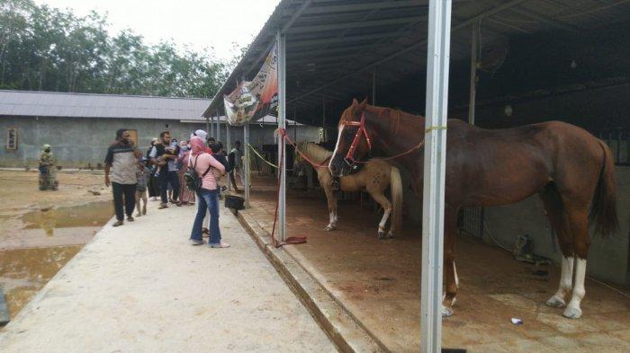 Travel - Wisata Al Qarni Stable Tabalong Tawarkan Sensasi Berkuda