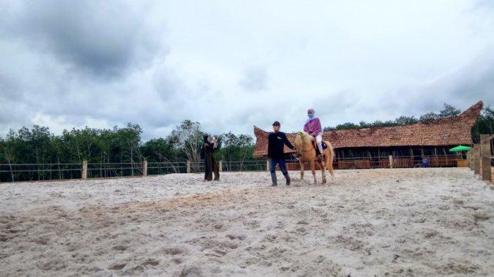Wisata Berkuda Al Qarni Stable Tabalong, Miliki 11 Kuda, Diantaranya Ada yang Jenis Import