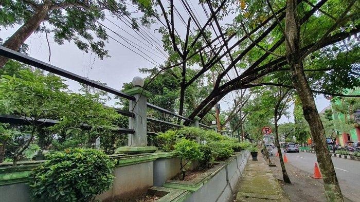 Pohon Penghijauan di RTH Rantau Nyaris Tumbang, Begini Kondisinya