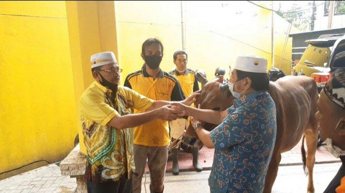 Fraksi Golkar DPRD Provinsi Kalsel Berikan Hewan Kurban Terbaik Sapi Limousin