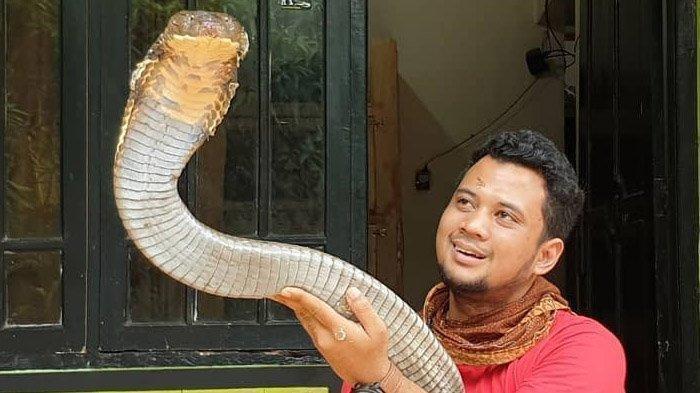 Lihat Keadaan Ular King Kobra Garaga Milik Panji Petualang Kini, Adam Thorn: The King