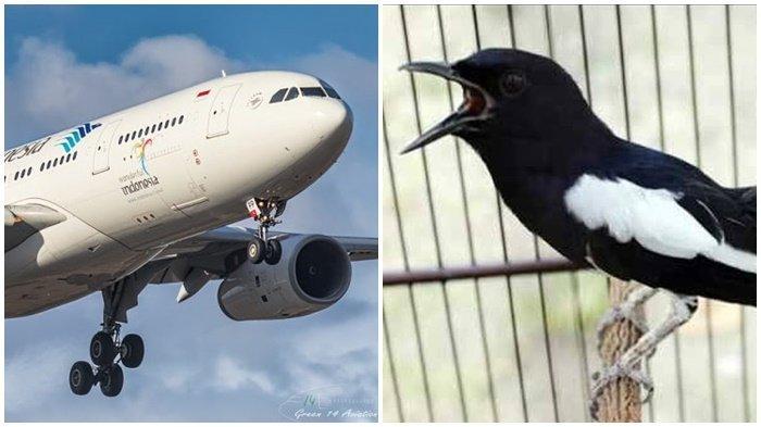Garuda Lagi Garuda Lagi Kini Giliran Burung Kacer Seharga Rp 150 Juta Hilang Di Bagasi Banjarmasin Post