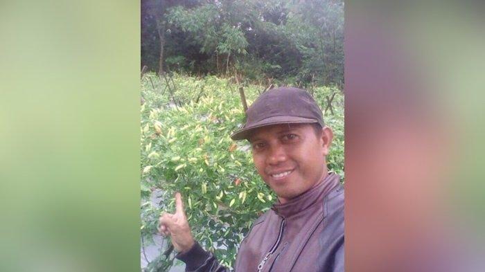 Harga Cabai Rawit di Kabupaten HST Makin Menyengat, Ini Penyebabnya Menurut Petani