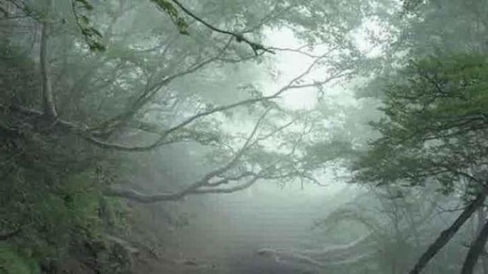 Inilah 10 Hutan Paling Misterius, Seram dan Mistis di Dunia
