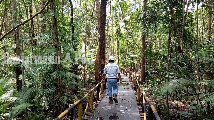 Banyak Jenis Kayu Khas Tropis di Hutan Galam Swarangan Kabupaten Tanahlaut
