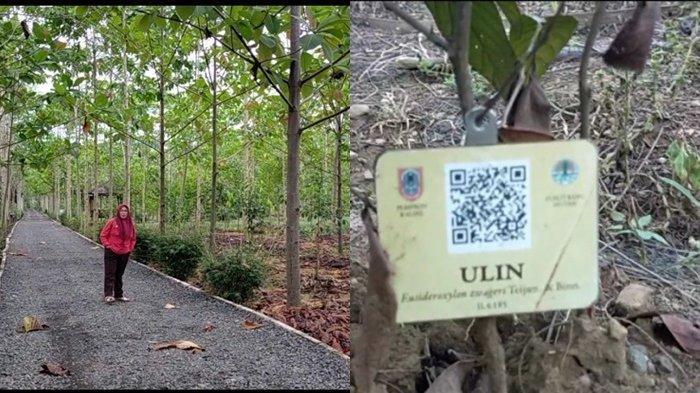 Cocok Jadi Wisata Edukasi, Taman Hutan Hutan Tropis Indonesia di Banjarbaru ada Banyak Pohon Langka