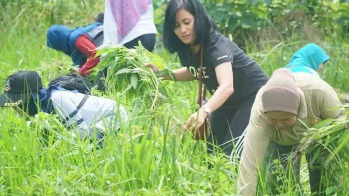 Tanam dan Panen Kangkung, Ibu-ibu Persit Kodim 1011/Kualakapuas Hemat Belanja Dapur