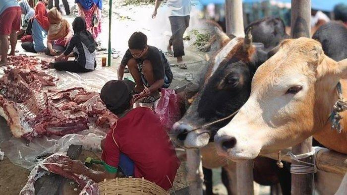 Ilustrasi penyembelihan dan pembagian daging kurban Idul Adha.