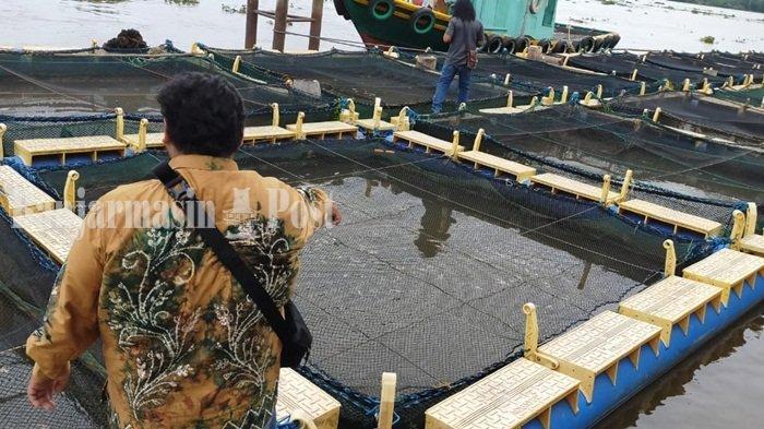 2,5 Juta Ikan Nila Mati di Jala Apung Sungai Barito, Dinas Lingkungan Hidup Batola Ambil Sampel Air