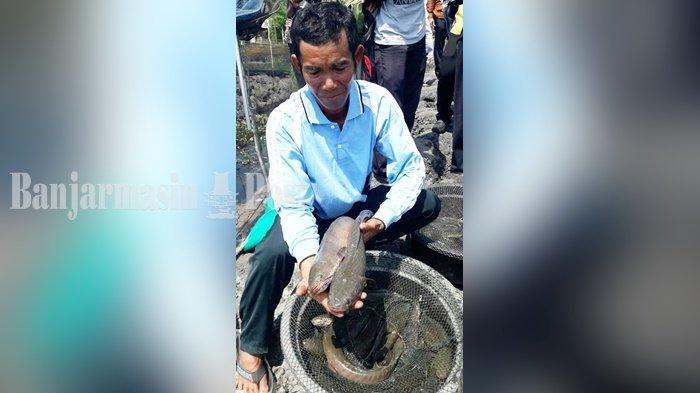 Menjanjikan, Ekspor Albumin Ikan Haruan dan Sarang Walet dari Kalsel