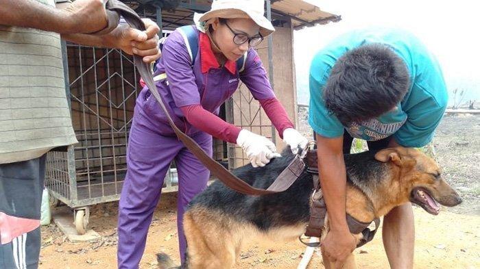 Warga Palangkaraya Masih Ketakutan Anjing Liar Rawan Bawa Penyakit Rabies