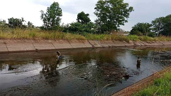 Pencari ikan banyak pakai jaring lunta di saluran irigasi Martapura yang mengering
