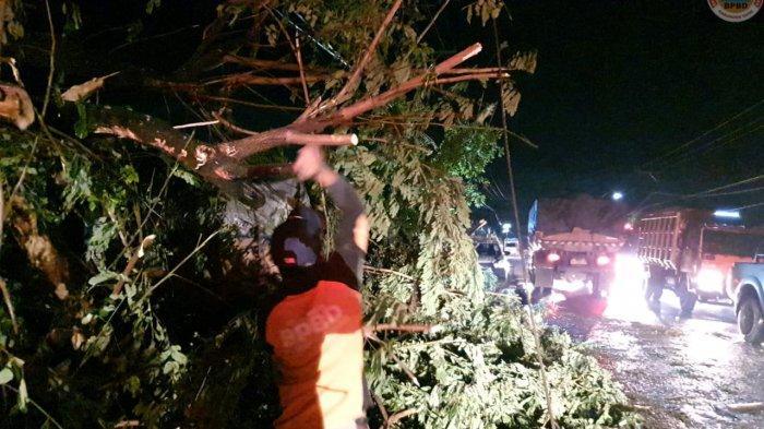 Pohon Penghijauan Tumbang di Jalan Nasional Kabupaten Tapin Ditabrak Truk Angkutan Semen