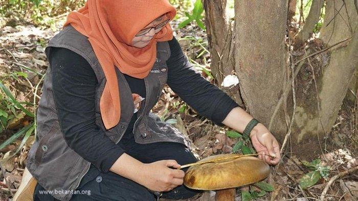 Jamur Raksasa di Taman Biodiversitas Desa Wisata Anjir Muara Kabupaten Batola