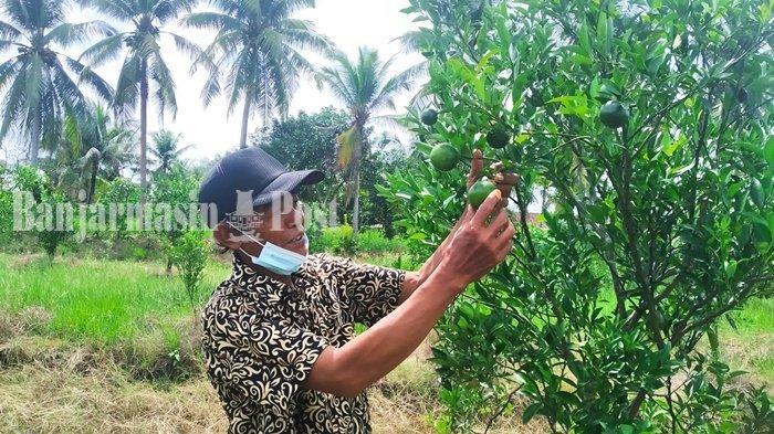 KalselPedia - Pengurus Bumdes Berkah Bersama Batola Impikan Jadi Kawasan Agrowisata
