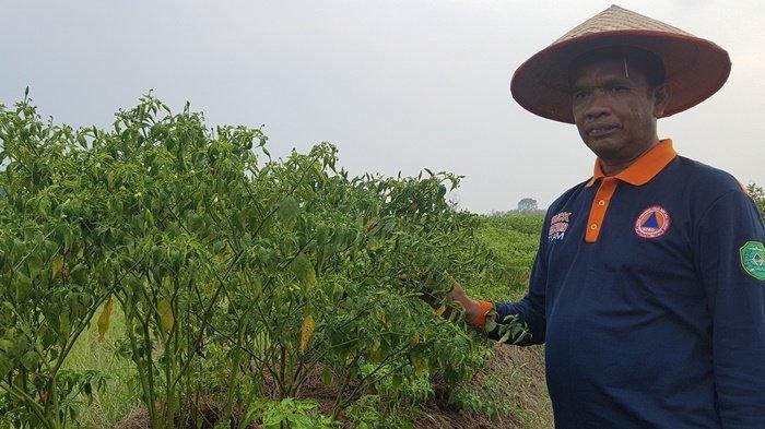 Tapin Diguyur Hujan, Junaidi Senang Desa Hiyung Terhindar dari Ancaman Karhutla