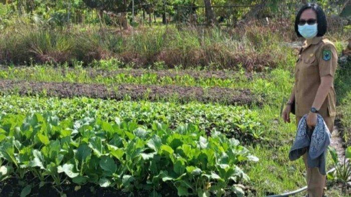 Uji Sampel Sayuran dan Buah untuk Pastikan Keamanan Pangan di Kabupaten Kapuas