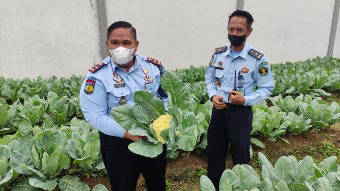 VIDEO Lapas Tanjung Tabalong Budidayakan Brokoli