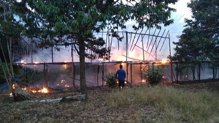 Kandang di Pandansari Tanahlaut Ludes Terbakar, Ribuan Anakan Ayam Habis Terpanggang