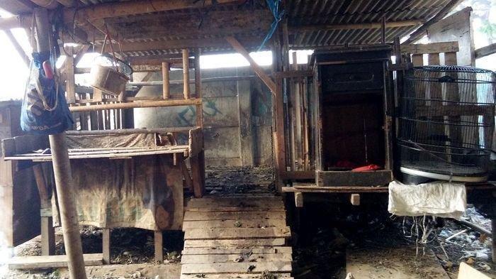 Kambingnya 24 Ekor Raib di Kandang, Maknur Merasa Terkena Gendam, Sisakan Darah dan Jeroan