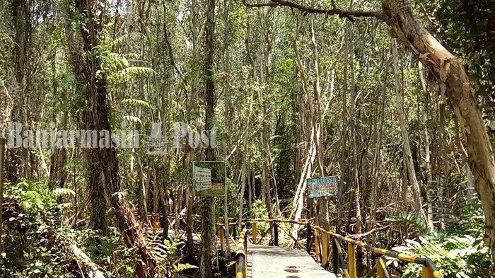 Hutan Galam Perawan di Kabupaten Tanahlaut Berdekatan dengan Pelabuhan Emas Hitam