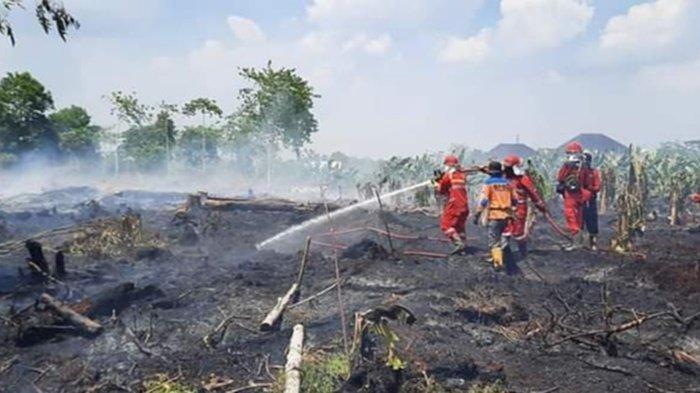 Karhutla Kalteng, Petugas Padamkan Api yang Hanguskan Kebun di Kabupaten Kobar