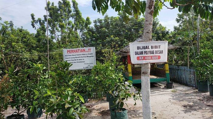 Wisata Kalteng, Kebun Buah Cipta Rasa Palangkaraya, Tersedia Bibit Buah-buahan