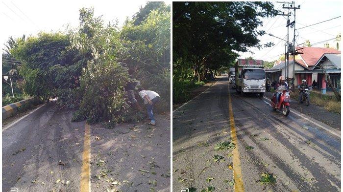 Pohon Tumbang di Kecamatan Lokpaikat Tapin Ancam Pengguna Jalan Nasional