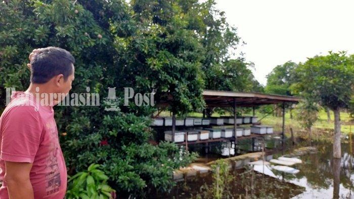 Madu Asli dengan Harga Terjangkau di Sungai Durait Hulu Kabupaten HSU