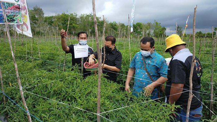 Petani Cabai di Sampit Dapat Bantuan Peralatan Pertanian dari BI Kalteng