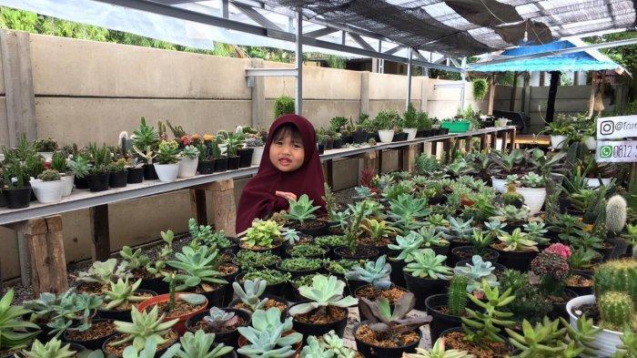 Pemasaran Kaktus dan Sukulen Gencar Melalui Media Sosial