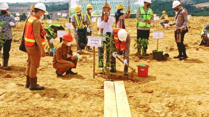 Ketua DPRD Kotabaru Syairi Mukhlis S.Sos mengangkat bibit pohon yang ditanam di lahan reklamasi PT STC.