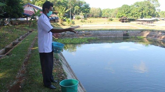 BPBAT Mandiangin Budidaya Ribuan Ekor Ikan Gabus Haruan, Siapkan Indukan dan Teknologi Pembenihan